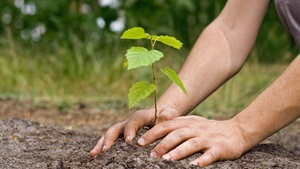 GreenPath: hands planting a tree